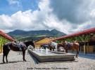 Reiten in Costa Rica & USA –  Hacienda AltaGracia & Rock Creek