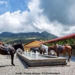 Hacienda Altagracia Pferde