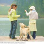Mit dem Haustier verreisen
