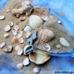 Urlaub am Strand - Muscheln Sand und Wasser