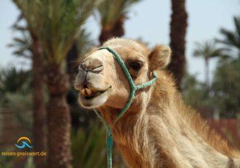 Ägypten neu entdecken – schneeweißer Strand am Mittelmeer