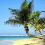 Strnad und Palmen auf Kuba in der Karibik