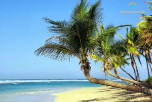 Strand und Palmen auf Kuba in der Karibik